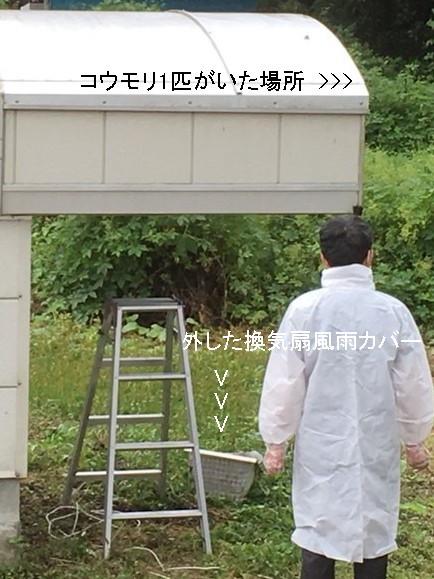 コウモリ.JPG